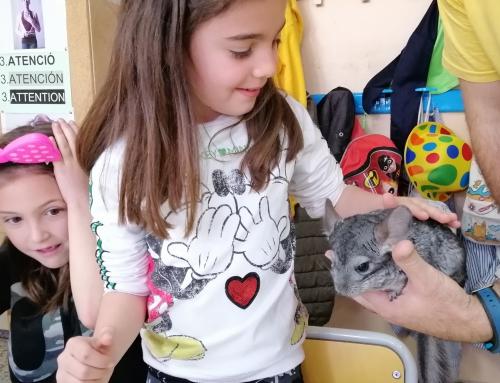 Taller d'animalons a 1r de primària