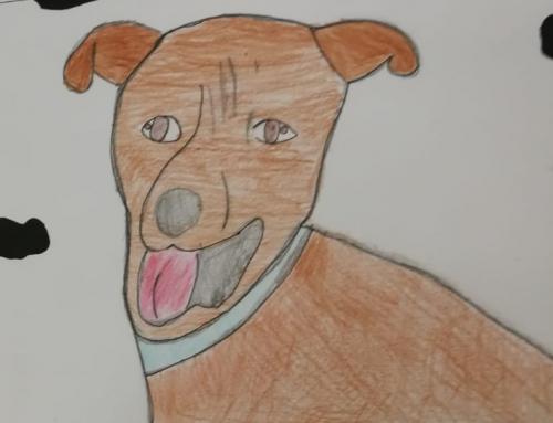 Campanya de sensibilització animal